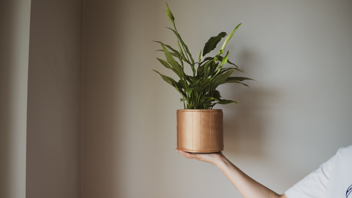 Ręcznie szyte osłonki: spraw, by Twoja roślinka była HaPi!